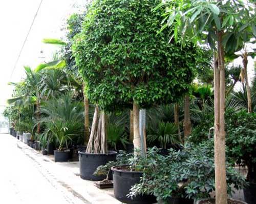 Fiche location plantes for Plantes d interieures