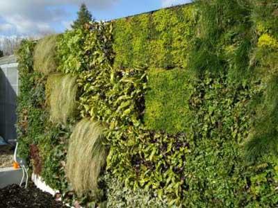 Fiche mur vegetal - Mur vegetal exterieur sans entretien ...