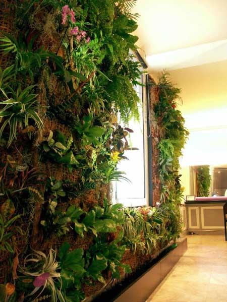 Fiche mur vegetal - Plante pour mur vegetal interieur ...
