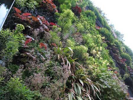 Fiche mur vegetal for Mur vegetal exterieur quelles plantes