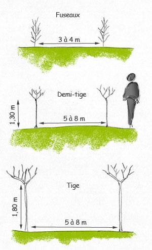 Fiche taille arbres fruitiers - Quand planter un arbre fruitier ...